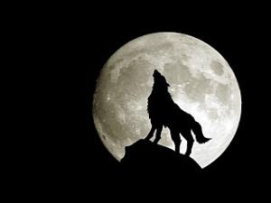 Mimpi Serigala